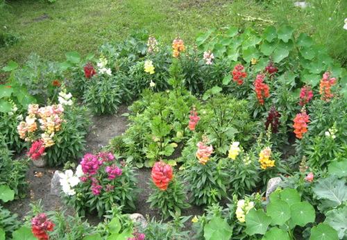 Если вы хотите иметь красивый цветник