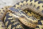 Осторожно: змеи!